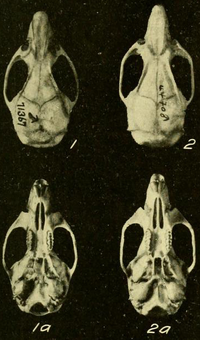 Four skulls seen from above and below.